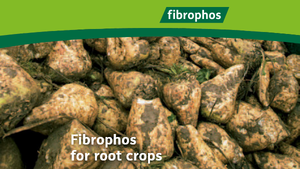 Fibrophos for root crops